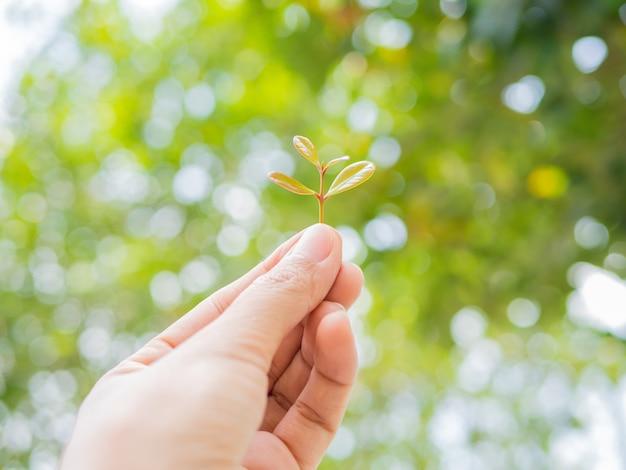 手を伸ばして成長する手