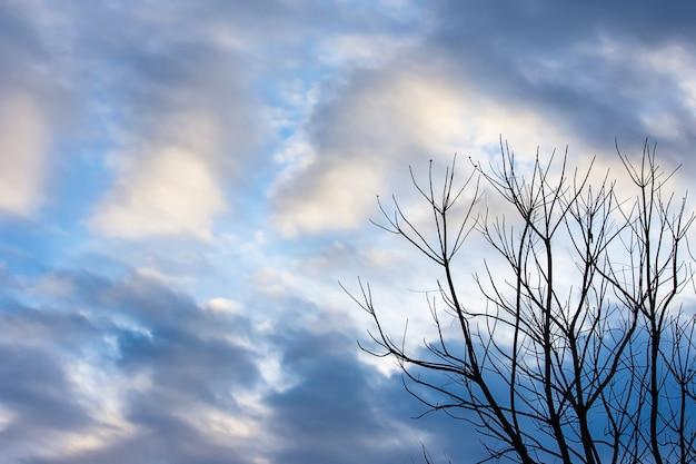 Красота неба с облаками и деревом.