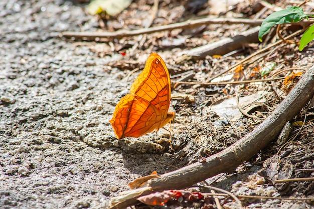 岩の上の美しいパターンを持つオレンジ色の蝶。