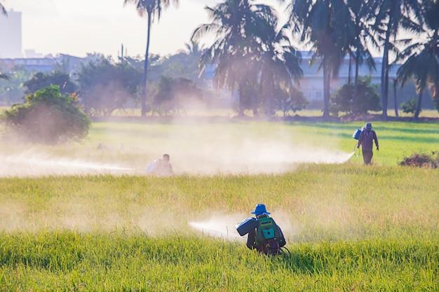 農民は緑の野原に農作物を散布しています。