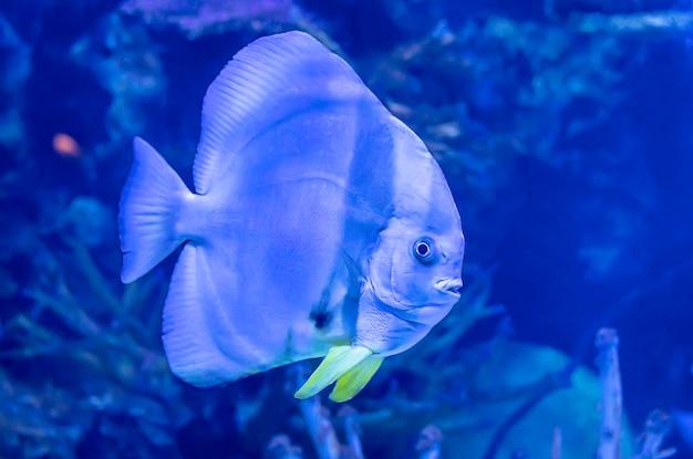 海の中のカラフルな魚はタイのサンゴを背景します。