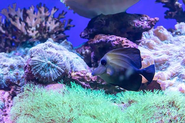 Красочные рыбы на фоне моря кораллов, таиланд.