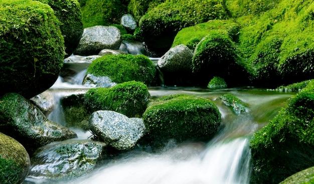 ニュージーランドの平和な自然の流れ。