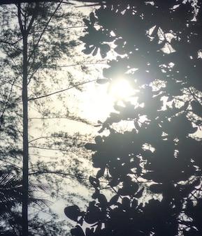 Одинокая осенняя осень