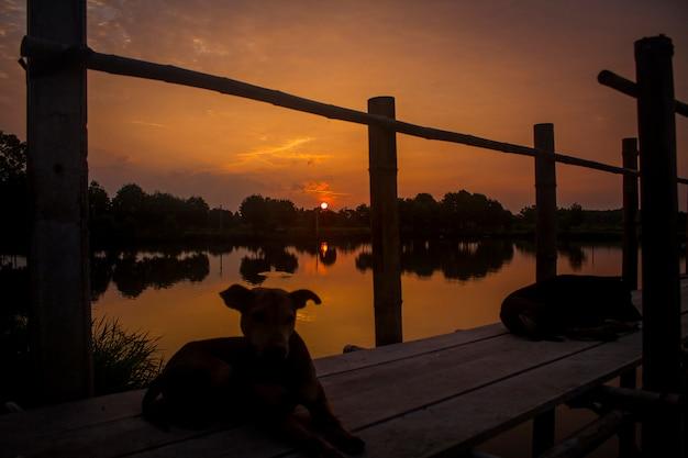 Силуэт собака закат природа озеро