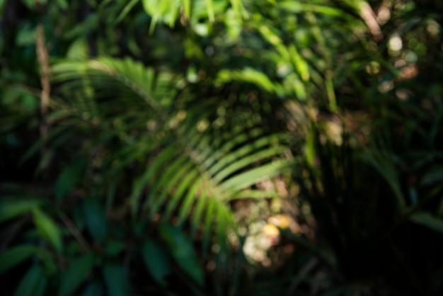 自然の生態環境緑の生態