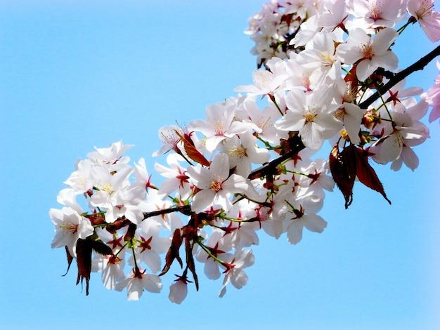 Цветочная расцветка ботаническая весна красивая концепция