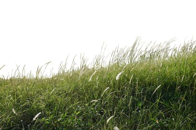 Травяное поле