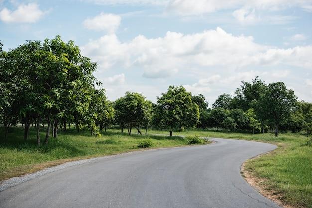 木々の間の道