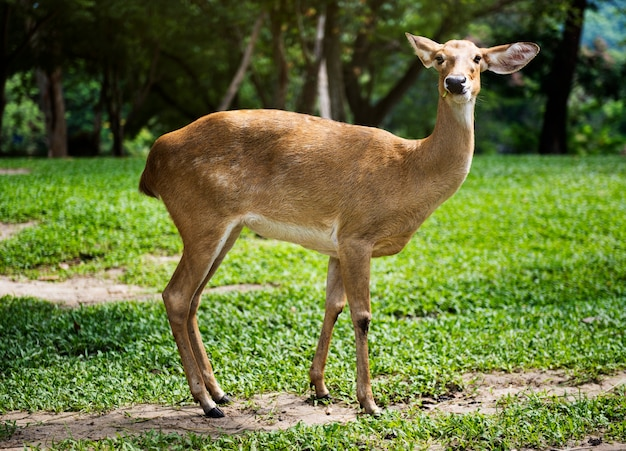 動物園での鹿のクローズアップ