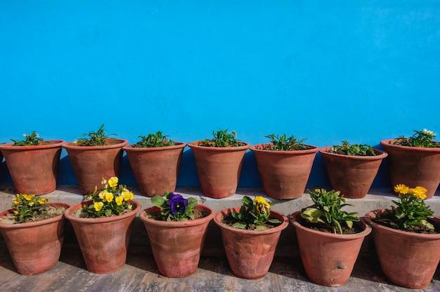 青い壁の花の鉢