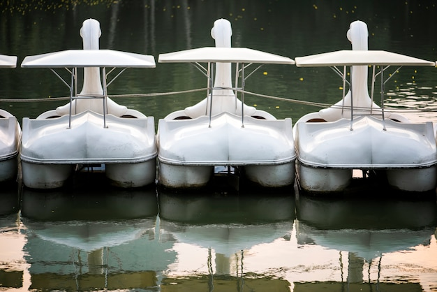 湖の白鳥のパドルボート