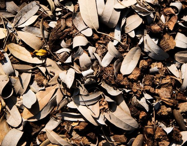 地面に茶色の葉とココナッツの殻