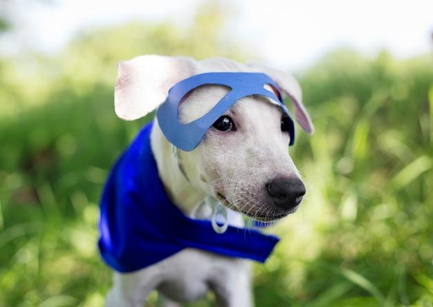 犬のコスチューム繁殖犬の友達哺乳動物