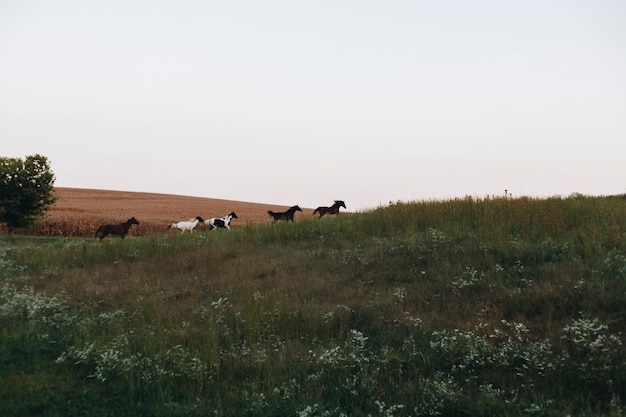 丘の上を走っている馬