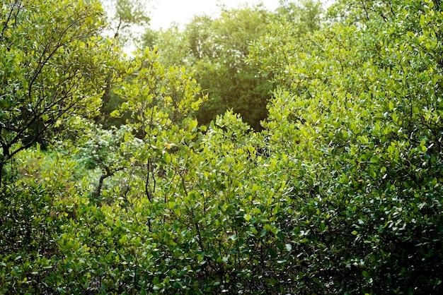 緑の植物の低木の質感