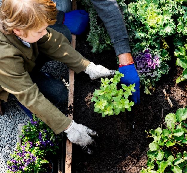 裏庭の庭から野菜を植える家族