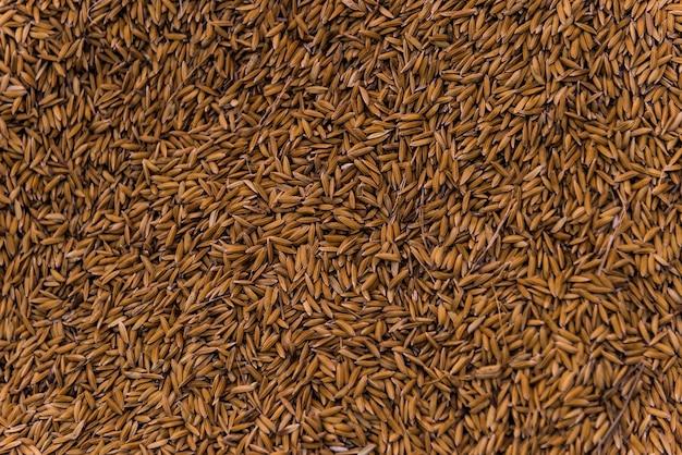 たくさんの乾燥した穀物またはオートムギ