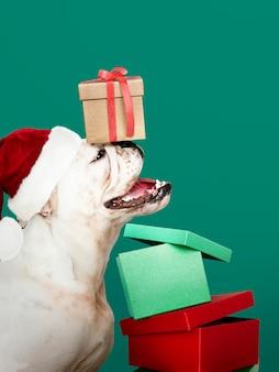 かわいいブルドッグの子犬は、ギフトボックスを持っている間、サンタの帽子をかぶって