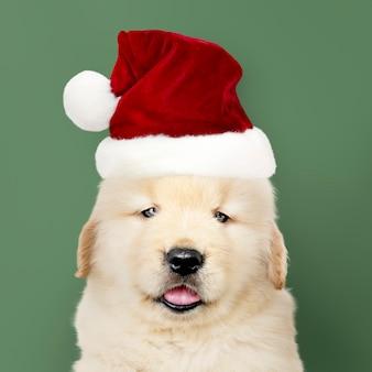 サンタの帽子を身に着けているゴールデンレトリーバーの子犬の肖像