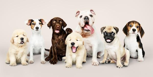 愛らしい子犬のグループの肖像