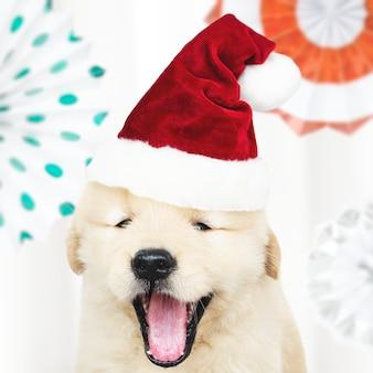 かわいいゴールデンレトリーバーの子犬の肖像画、サンタの帽子