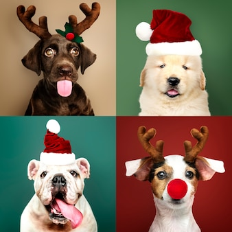 Набор портретов очаровательных щенков в рождественских костюмах