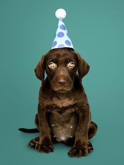 愛らしいラブラドールレトリーバーの子犬は、パーティーの帽子を身に着けている