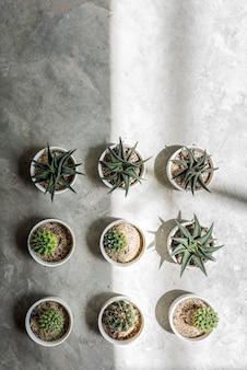 サボテンポットホーム植物コンセプト