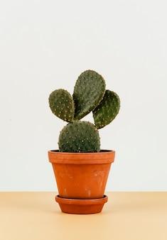 バニー耳のサボテンを花壇に