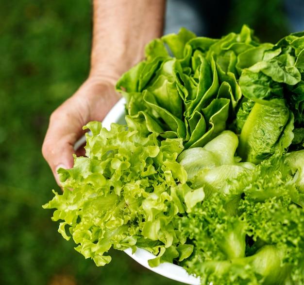 新鮮な有機グリーンリーフ野菜丼のクローズアップ