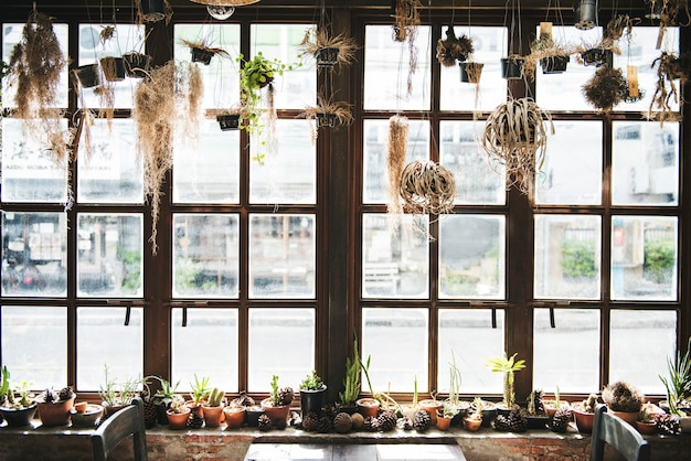 Концепция интерьера ботанического комнатного растения природы
