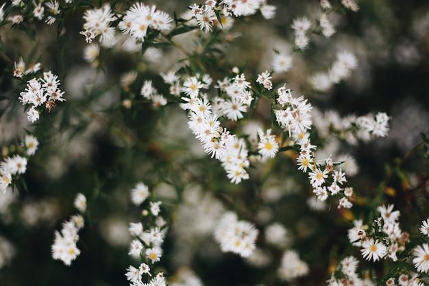 白いカッターの花のクローズアップ
