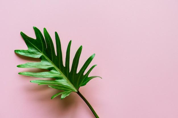 ピンクの背景に熱帯の葉