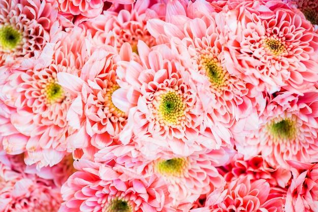 菊のテクスチャ背景のクローズアップ