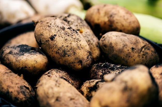 Крупным планом свежего органического картофеля