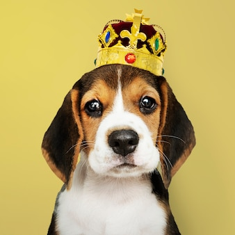 ビーグル子犬の冠をかぶって