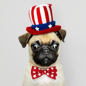 アメリカンパグの子犬