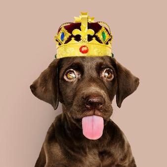 クラウンを着てラブラドール子犬