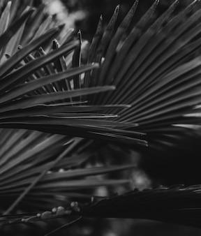 Карликовые листья пальметто