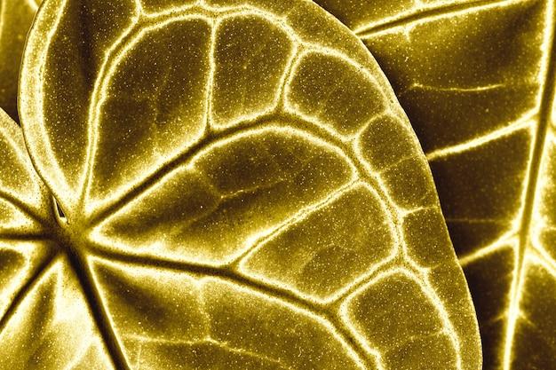 黄金の葉の背景