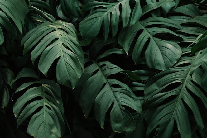 熱帯の緑の葉の背景