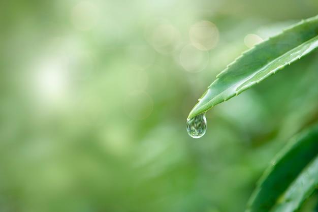自然の中で純粋な水
