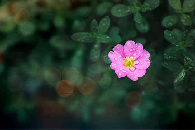 Цветок в дикой природе