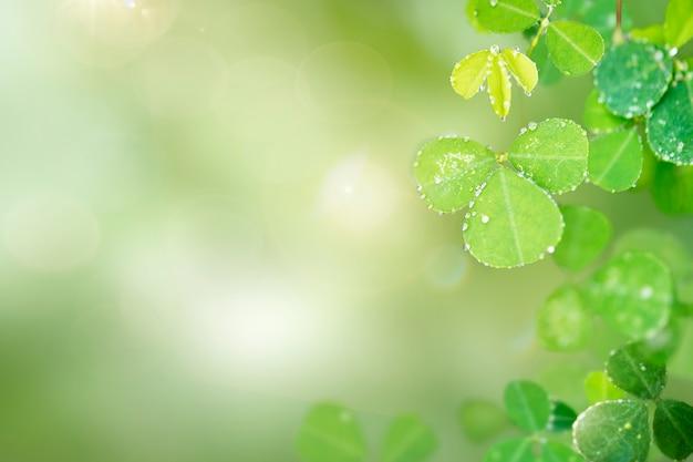 Круглые листья