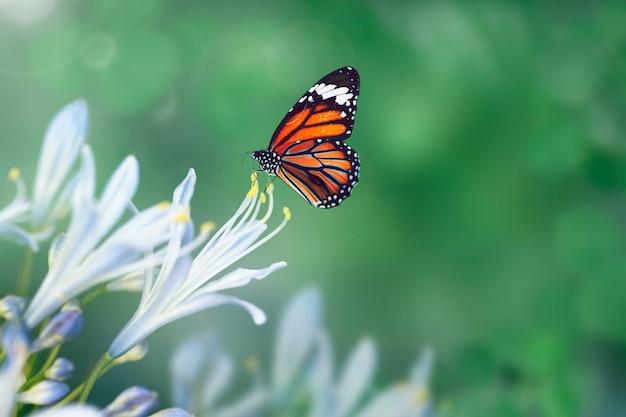 Бабочка в дикой природе