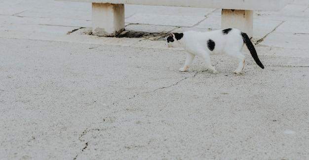 Уличный кот в гавани