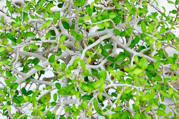 緑の抽象的な葉の水平背景パターン