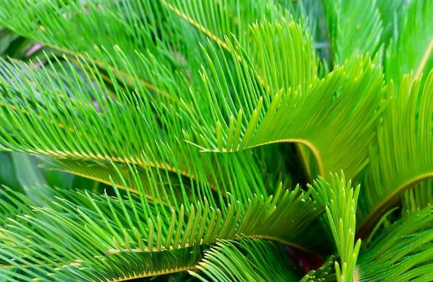 庭でエキゾチックなソテツヤシの木