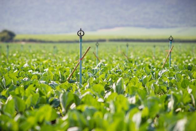植物に水をまくのに使用される庭の水スプリンガー